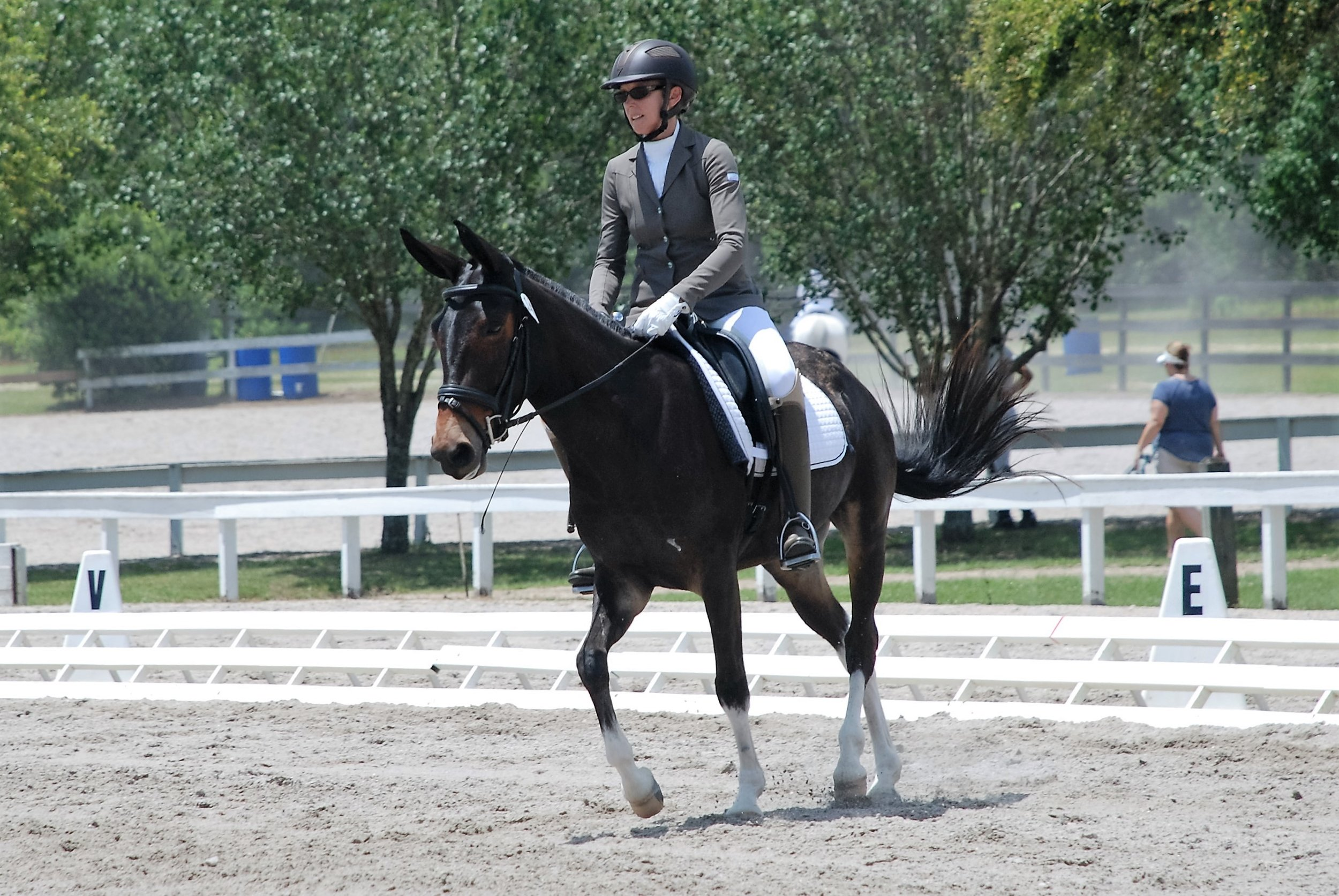 Vicky Busch and Slate the Dressage Mule