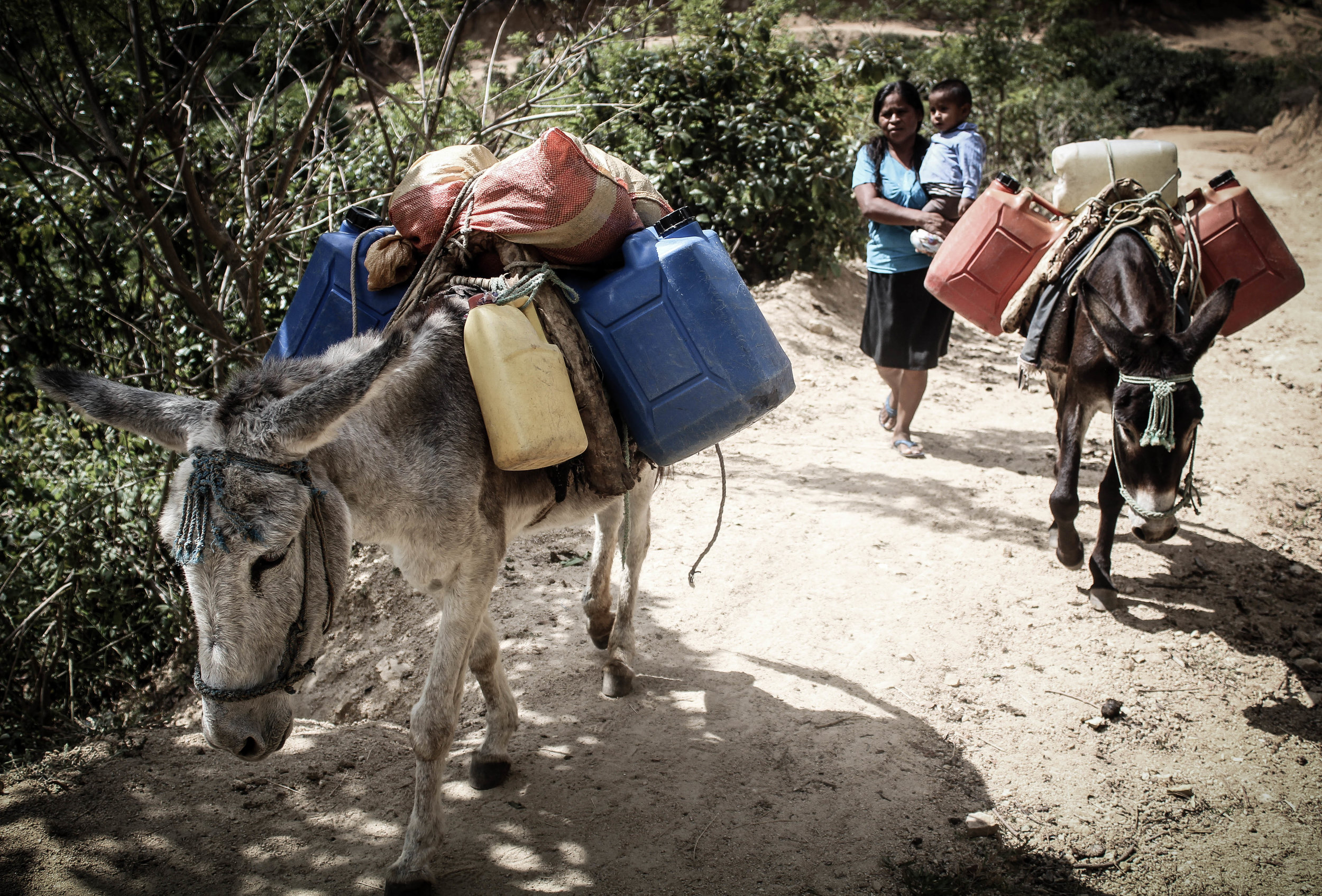 Working equines allow many poor women in the developing world to earn their own money, develop some independence, pay school fees so their children can receive an education, and much,  more..jpg