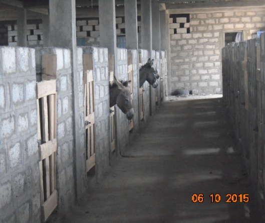 This is the type of interior that will be constructed through our Free The Donkeys campaign. The concrete walls and open wood doors help to keep the shelter cool.