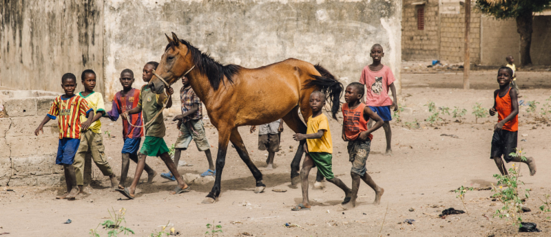 horse and lots of boys in senegal.png