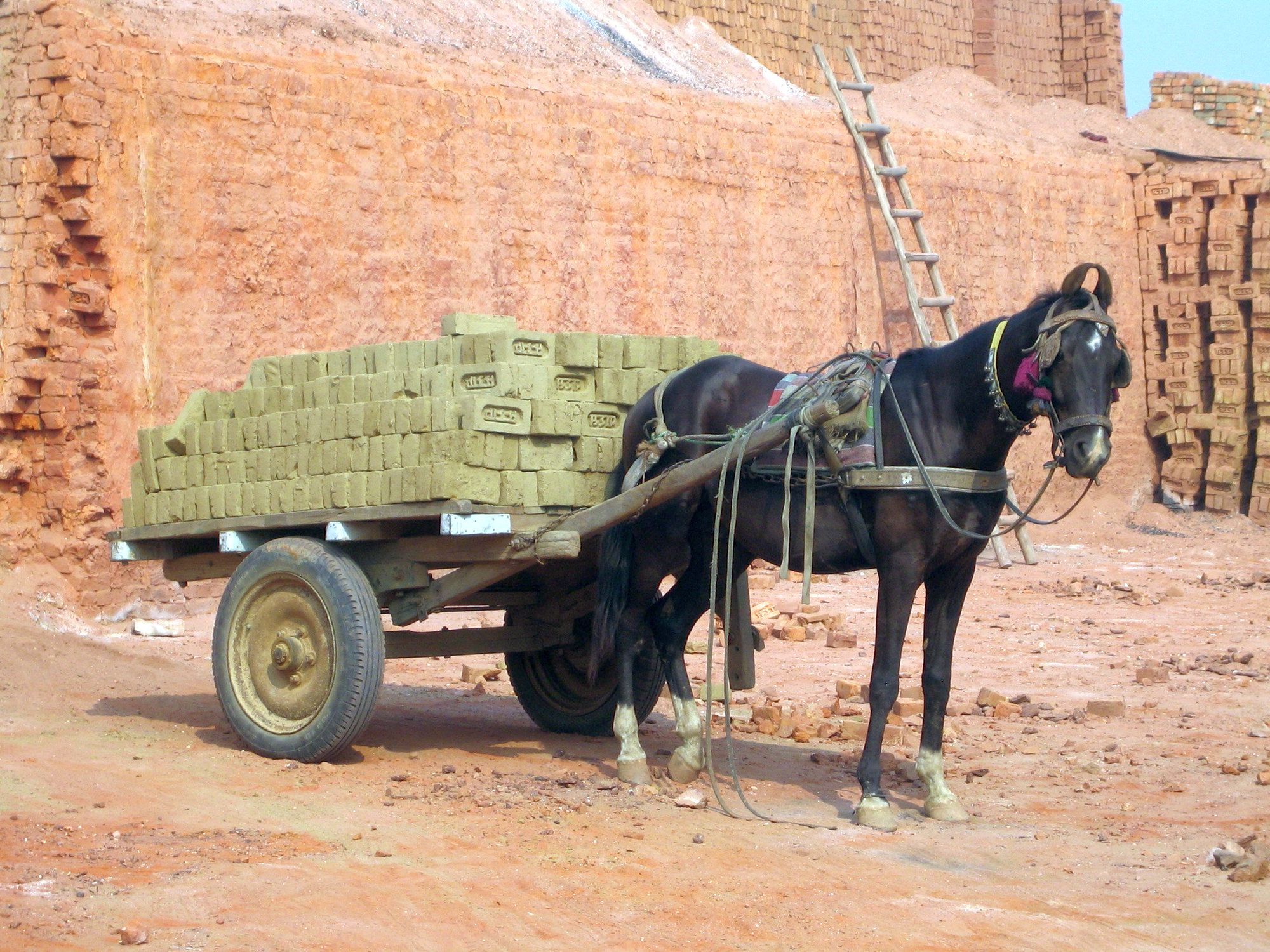 Brick kiln horse India  www.BrookeUSA.org.png