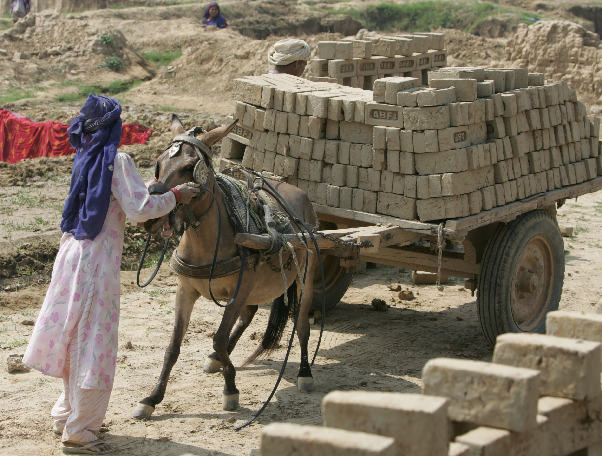 Horses and donkeys working in brick kilns are routinely made to haul 25-40 tons of bricks each day. www.BrookeUSA.org.jpg