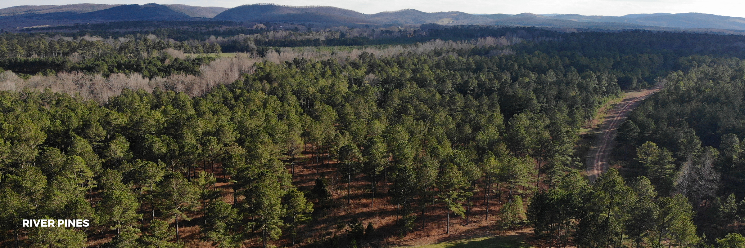 River-Pines.jpg