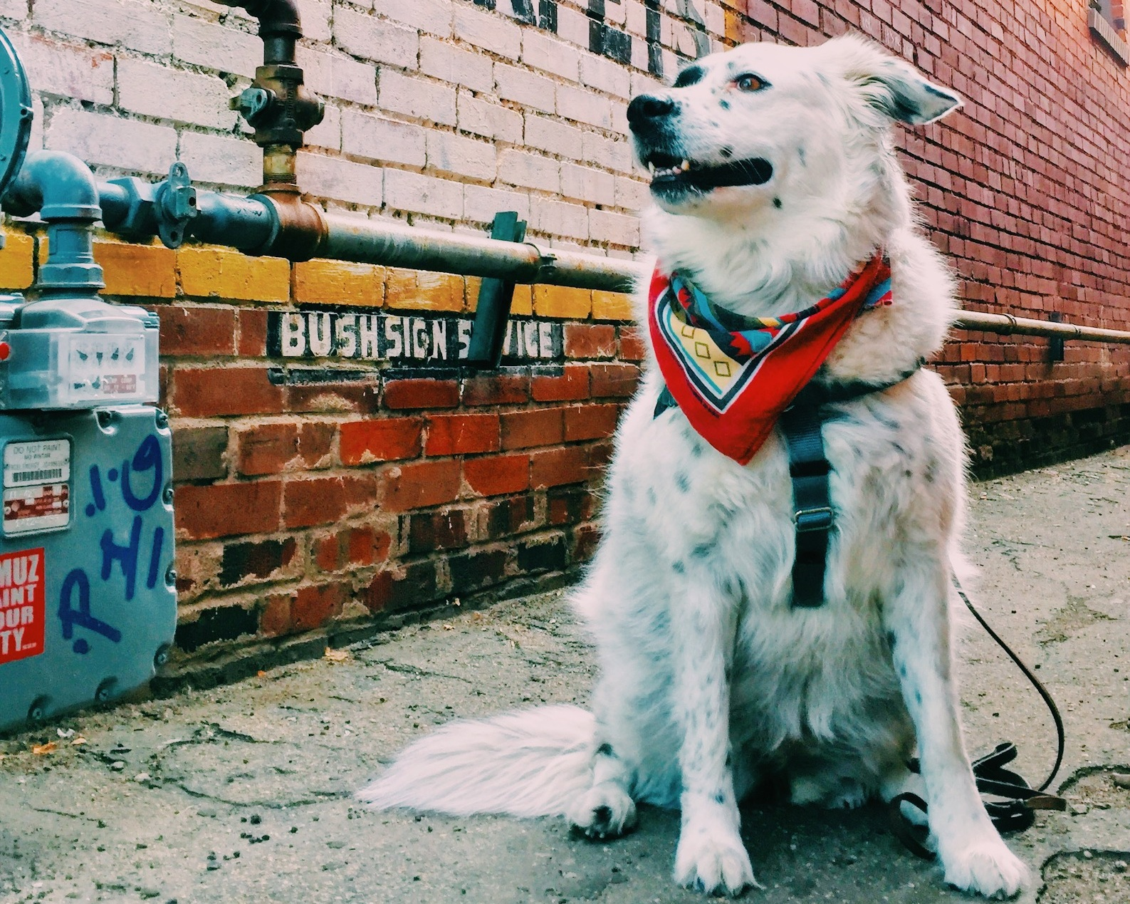 Hi. I'm Stella. - Co-founder and MVMT maker but mostly here for the treaties.50% Aussie + 50% Border Collie. 100% good girl. Big believer in my humans and know you will be too.