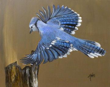 Blue Jay in Flight - 16x20 acrylic