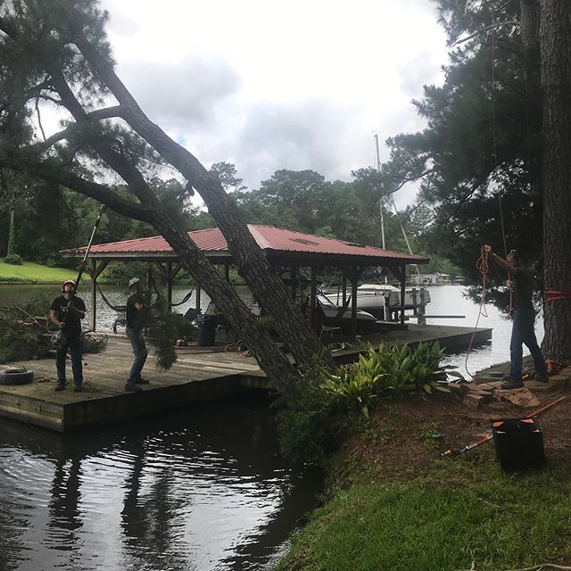 Trouble at the Lake! Pine trees leaning precariously over the lake!  No problem for Sunnybrook Tree Service!  A fun day at Lake Jacksonville.