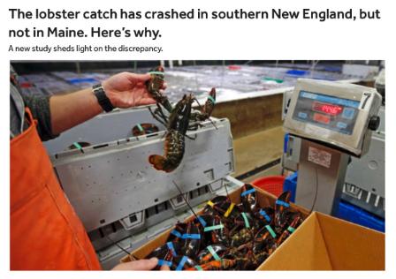 (Boston.com story,  https://www.boston.com/news/local-news/2018/01/22/lobster-catch-new-england )