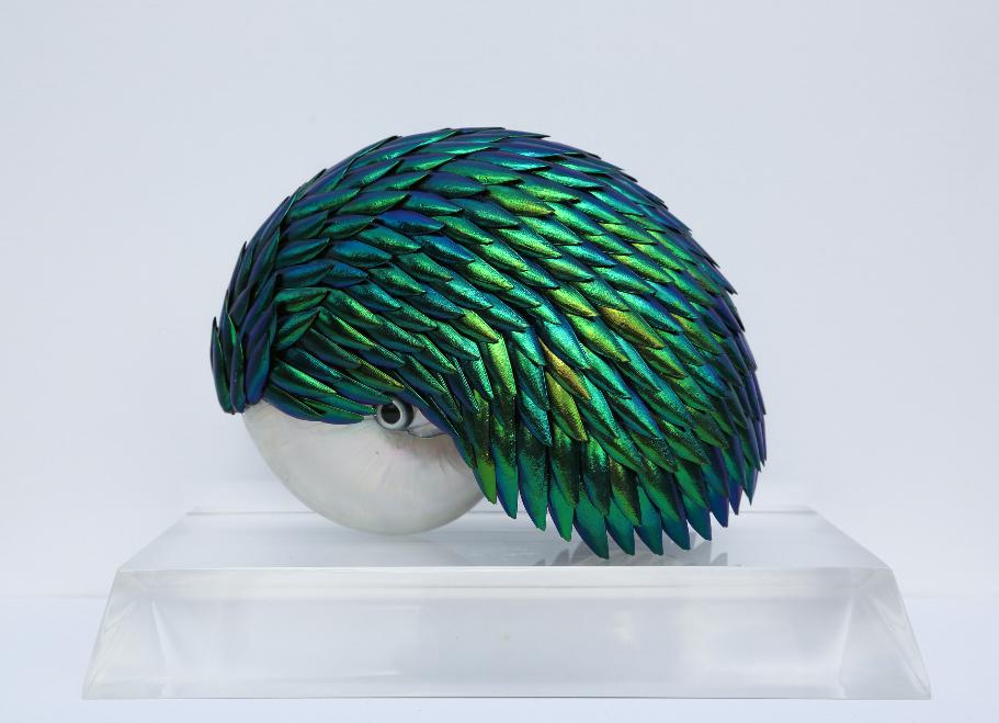 Elytra Nautilus