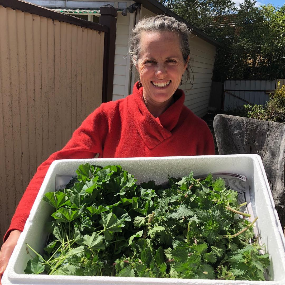 The good stories:  Deborah with a box of nettle and mallow. Deborah is one of the excellent  humans that form the Mid West Harvesting Hub, in Kandos/Mudgee area.  Here I am setting up one of the collection points for wild harvested produce  that gets then delivered to Sydney's fine dining kitchens with the  @wildfoodstore project.  Out here the land is receiving little rain and weeds are the first things to pop  up, so we harvest desirable produce and market it to the chefs of the city. The  Chefs get top level, wild foraged produce and the people on the land get some  cash for their effort. Right now diversification and promoting resilience via  creating a market around by-products of farming (weeds) is quite important.  The drought is real, and it does not look like is easing much. Deborah  harvested this as samples for the chefs from her 400 acres. There is more.  Check and follow @wildfoodstore if you want to be kept informed or if you'd  like to buy some.