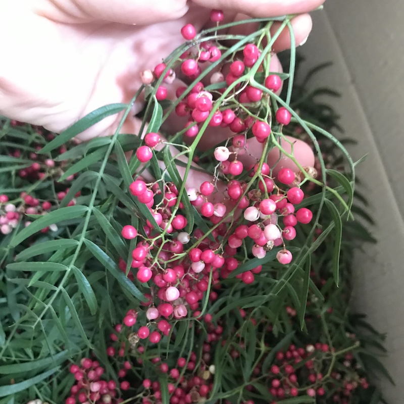 - Peppercorn berries – Schinus molleNow available. Floral, spicy.Excellent addition to drinks and as a garnish with a strong profile. Delivered in 25g punnets or contact for bulk quantities.