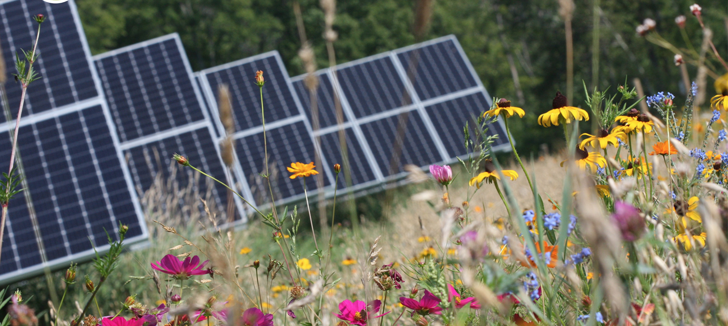 Bee-Friendly Solar is a Win-Win-Win for People, Planet and Pollinators -