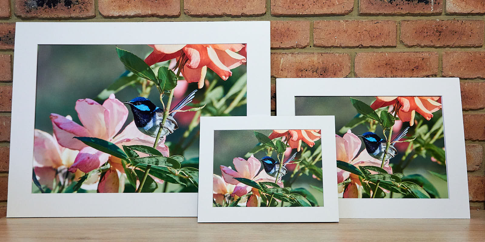 FINE ART PRINTS A4, A3, A2    Printed on Fine art Rag paper and framed with Ma  t Board and foam core backing. Can be hung as is or framed.