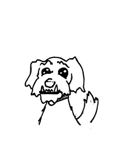 Marci- Studio Pup