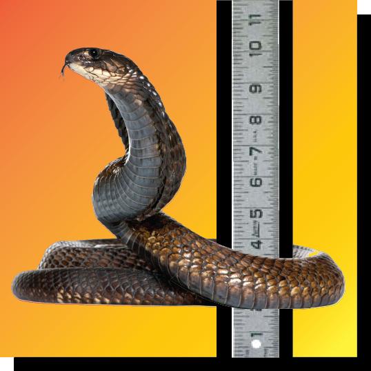 snakefoot