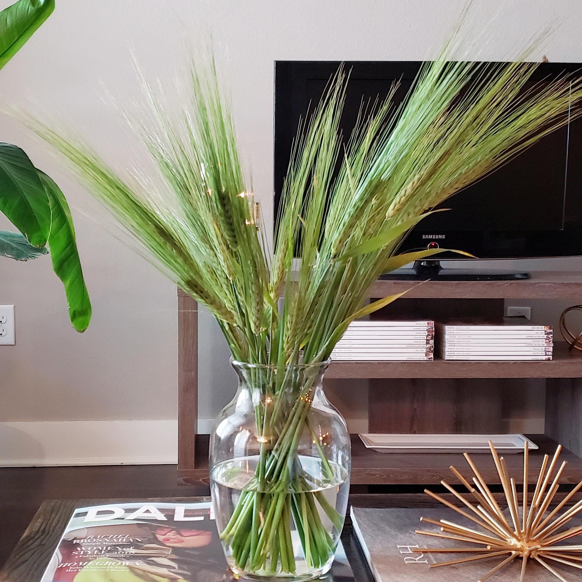 Real Harvest -
