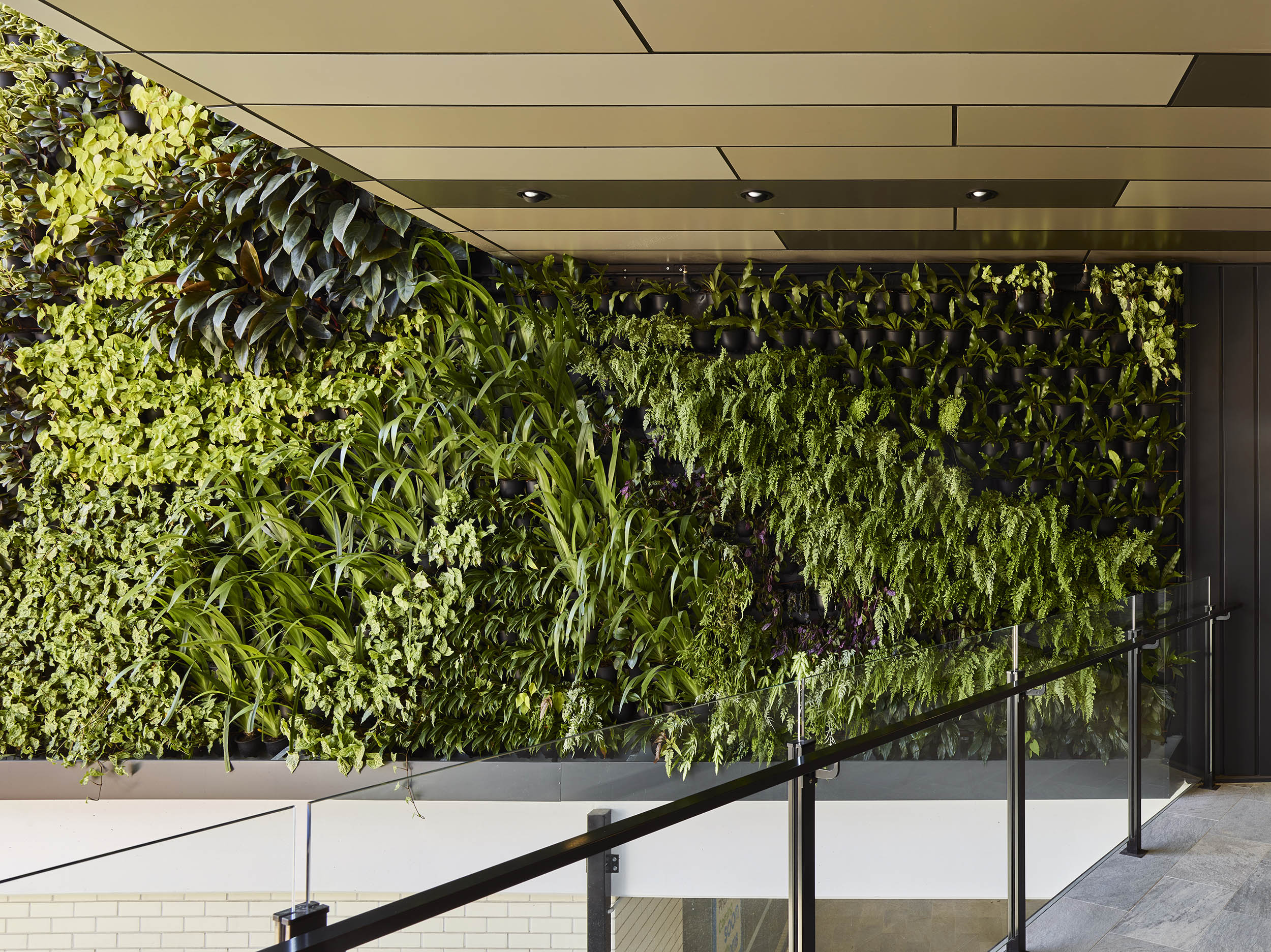 College Junction_Greenwall