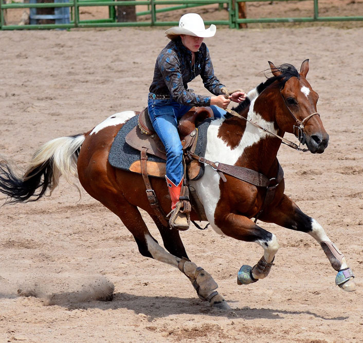 Performance Horse Supplements