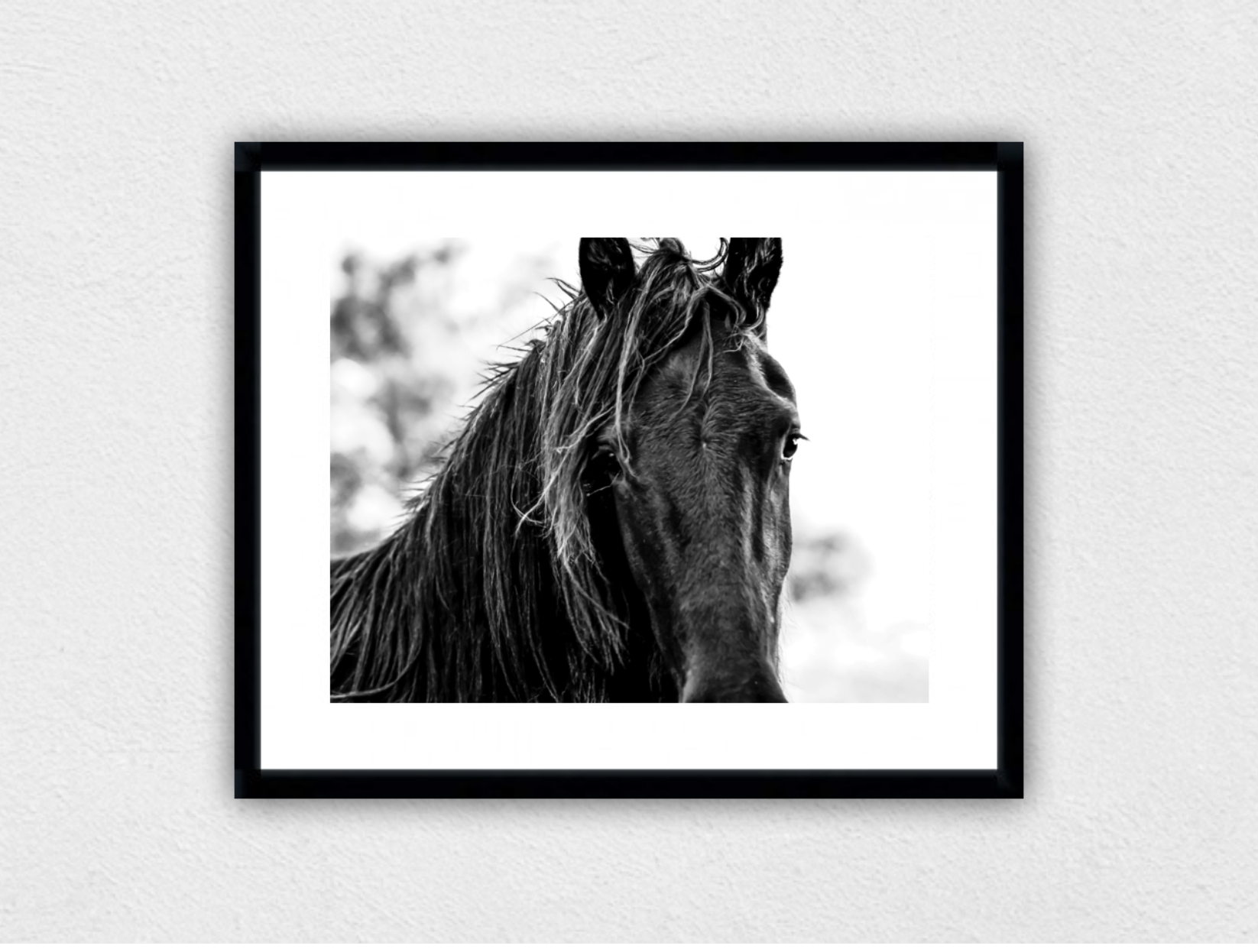 THE BLACK COLT - Seen here mounted and framed in black. All prints have the option of framing in black, white and natural timber (oak).