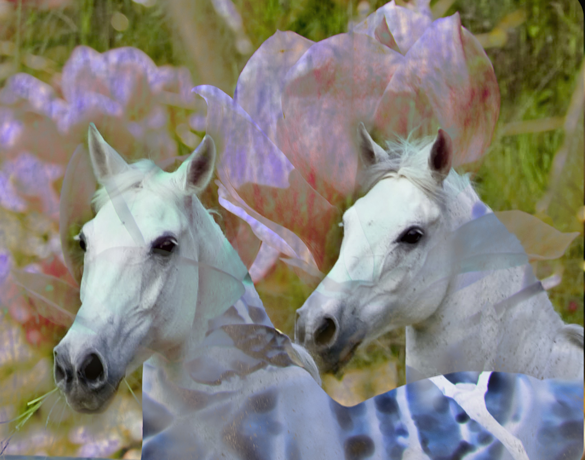 A photomontage of two Anglo Arabians at Il Paretaio created years later. This is where the fun begins.