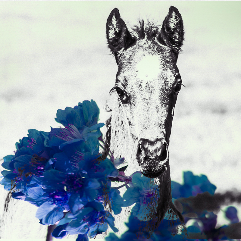 BLACK COLT PHOTOGRAPHY -