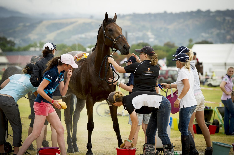 equestrian vimeo (21 of 78).jpg