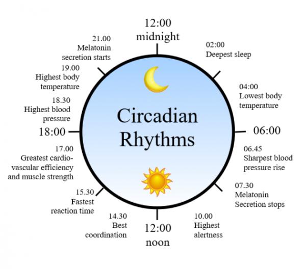 1462983035_circadian-rhythm-clock-600x528.png