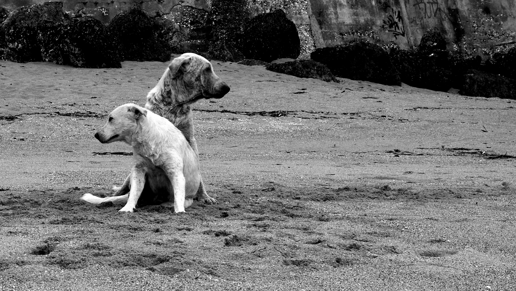 Dogs B&W.jpg