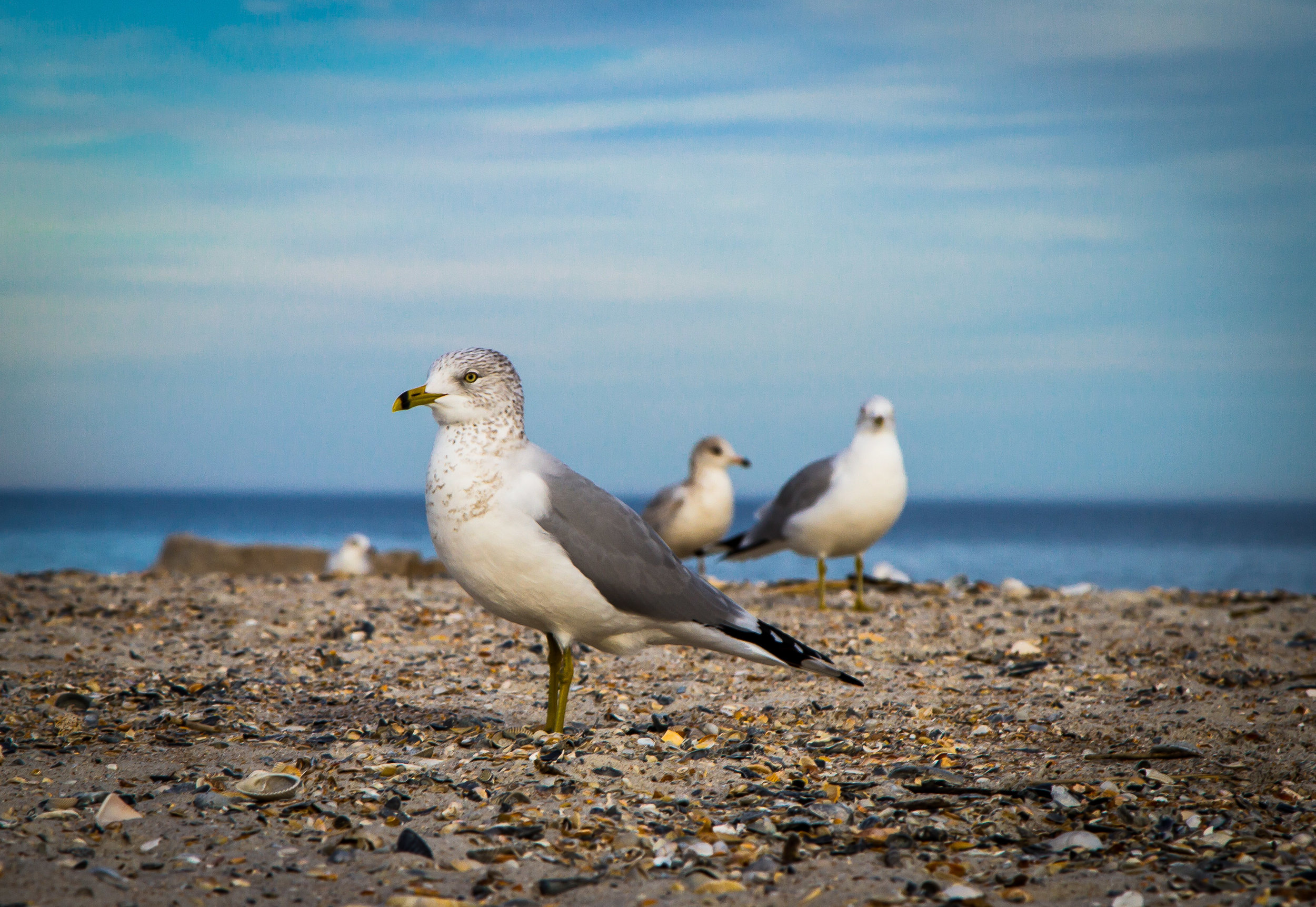 Birds on Shore.jpg