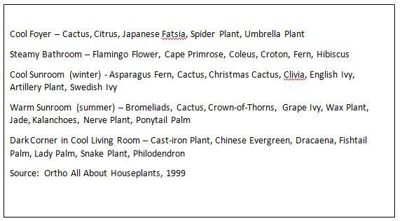 indoorplants2.JPG