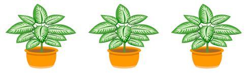indoorplants3.JPG
