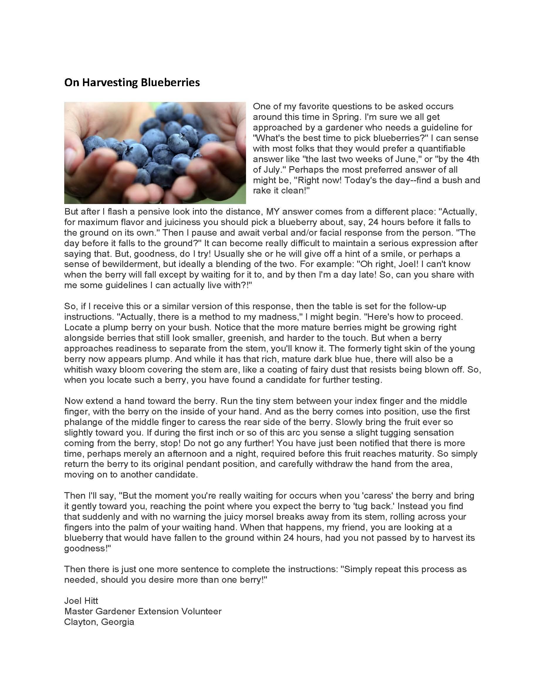 On Harvesting Blueberries  WebHitt.jpg