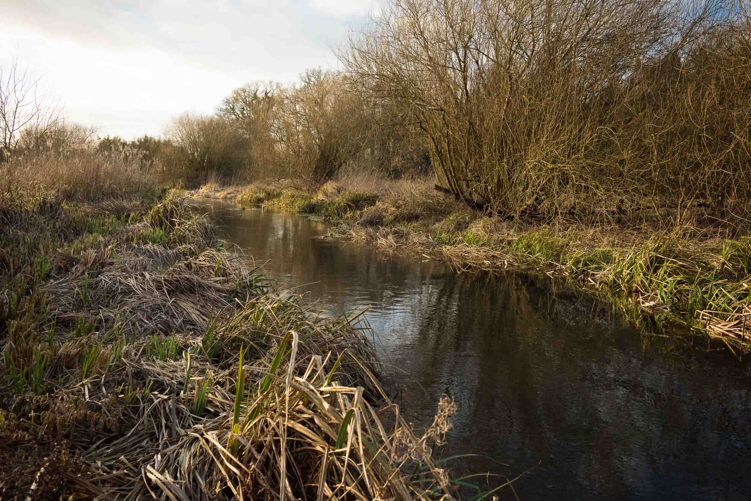vegetation enhancement -