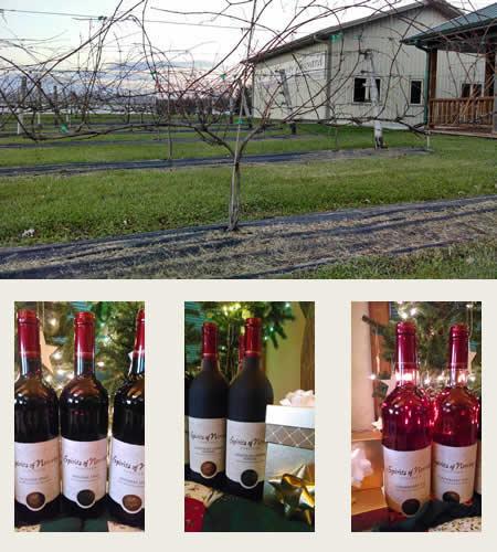 vineyard pic.jpg
