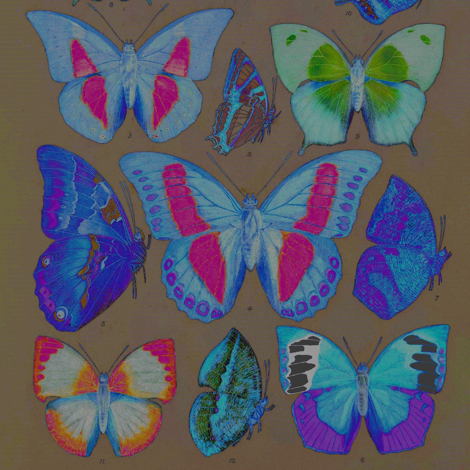 butterflies_1.jpg