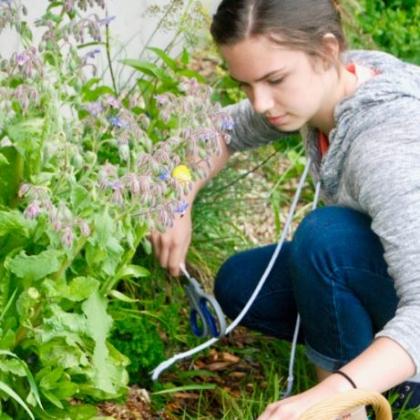 gardening-skills-2.jpg