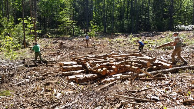 Staff and volunteers work to build brush piles…great habitat for small mammals, amphibians, and birds!