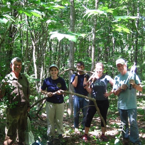 Volunteers work to remove Bittersweet vines from Sewall Woods Preserve.