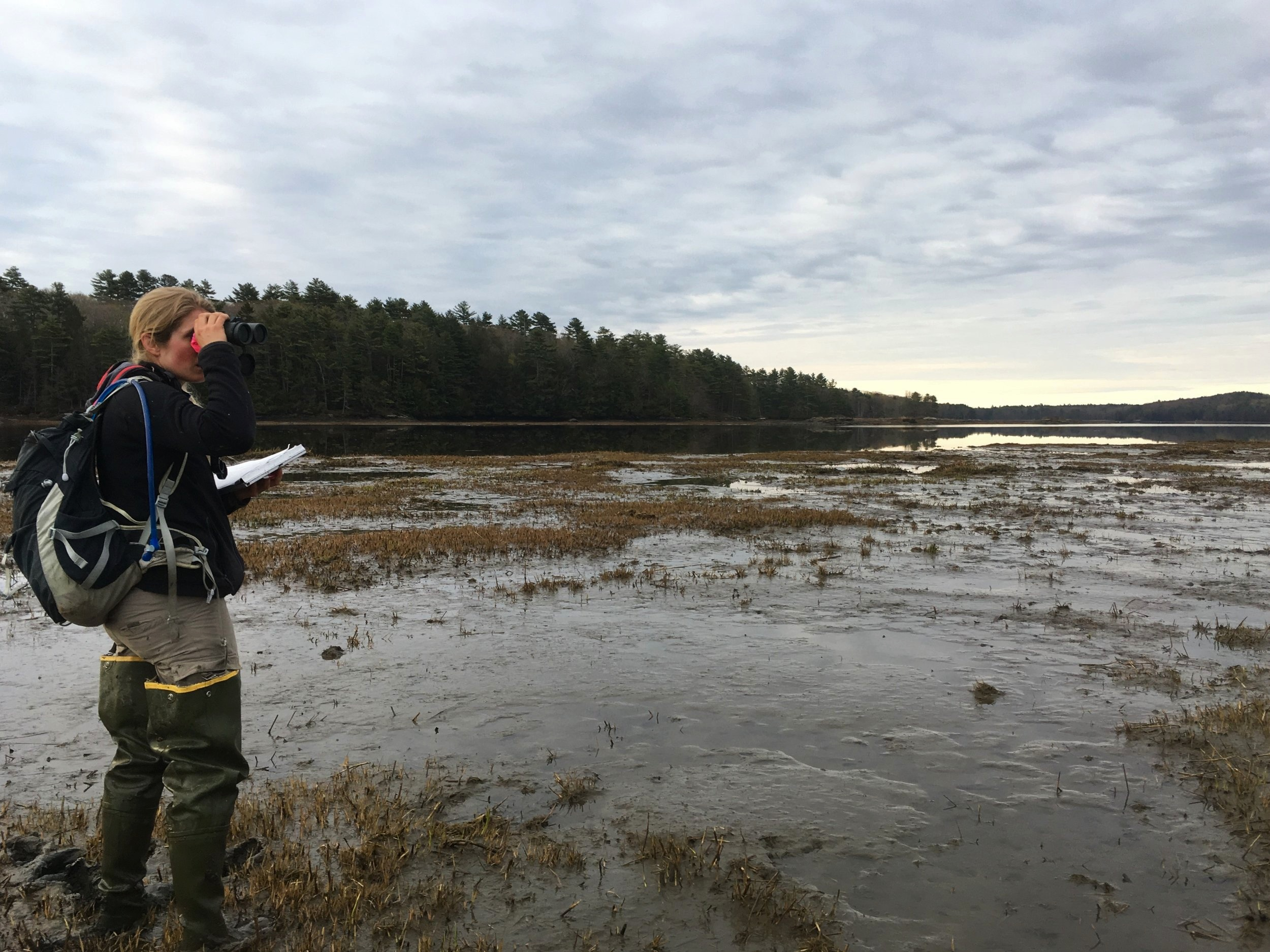 Kirstin Underwood scans the mudflats for birds.