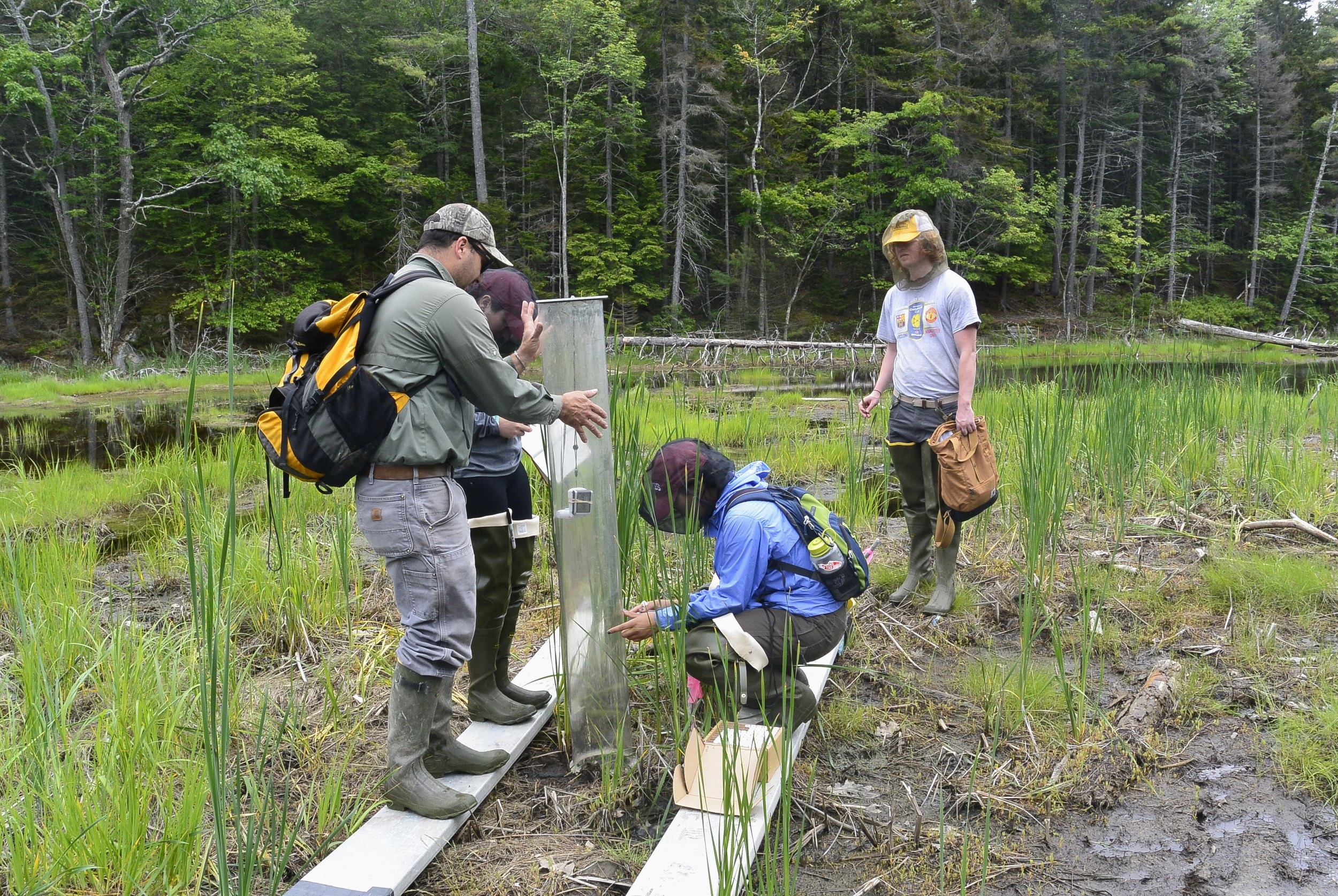 The Bates team carefully conducts their procedure in the marsh.