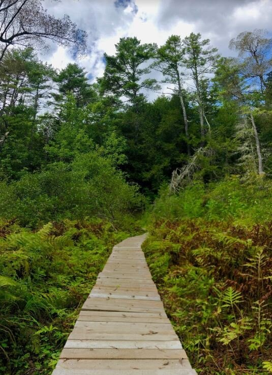 A perennial stream runs beneath this bog bridge. The trail features the longest KELT bog bridge to date measuring 100 ft, built by our Stewardship staff and volunteers.