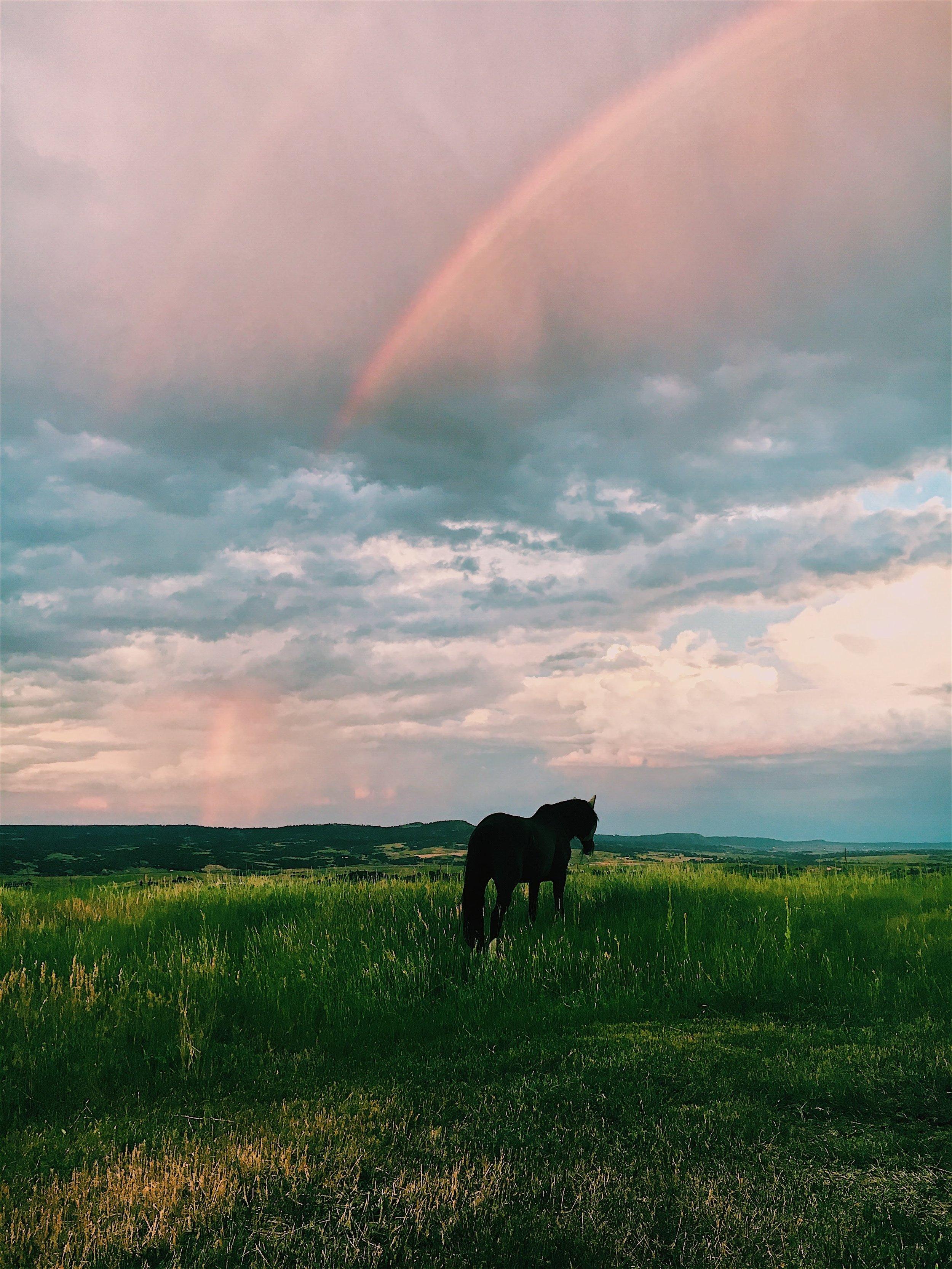 Bluto Rainbow.jpg