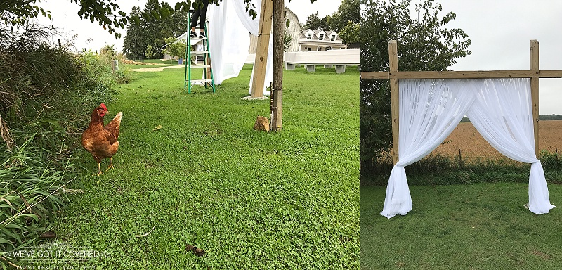 wedding on the farm with ceremony draping on the arch and help from animals