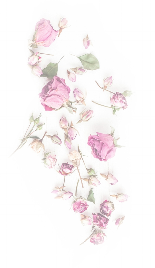 Flowers-bio-section 1.jpg