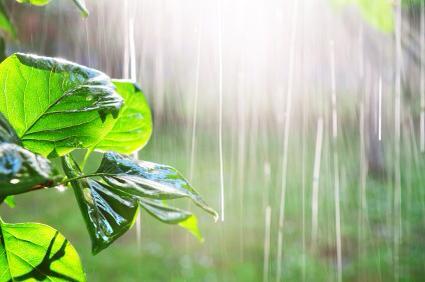 - Comme la pluie,Je m'évaporeAu seul regard du soleilPour revenir embrasser la terreEt grandirDans l'écorce des boisDe la forêt de ma mère