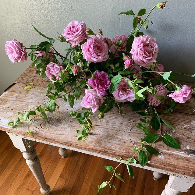 a study of roses and honeysuckle.