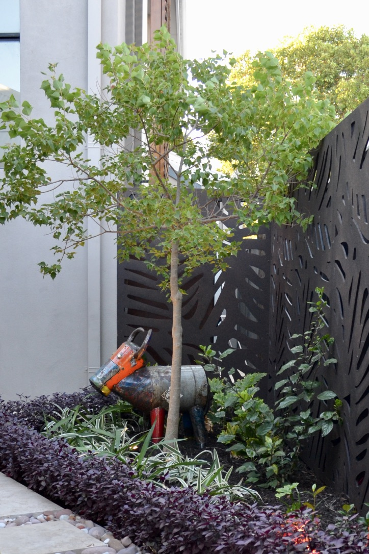 A quirky sculpture adds a personal touch to this urban courtyard, bordered by Outdeco Daintree screens, a central chinese tallow tree, with hibiscus, variegated flax lily and alternanthera below.