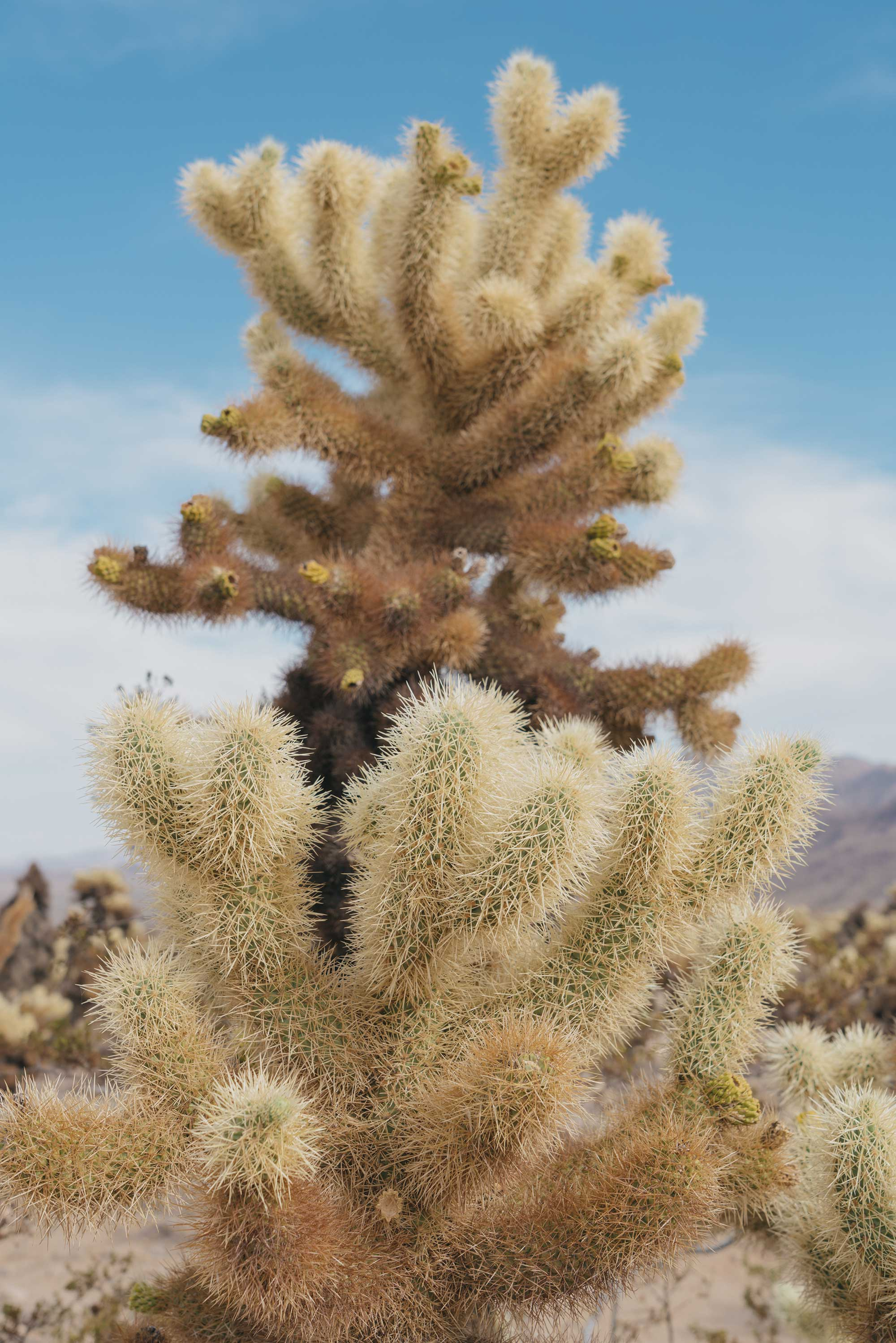 cactus-2.jpg
