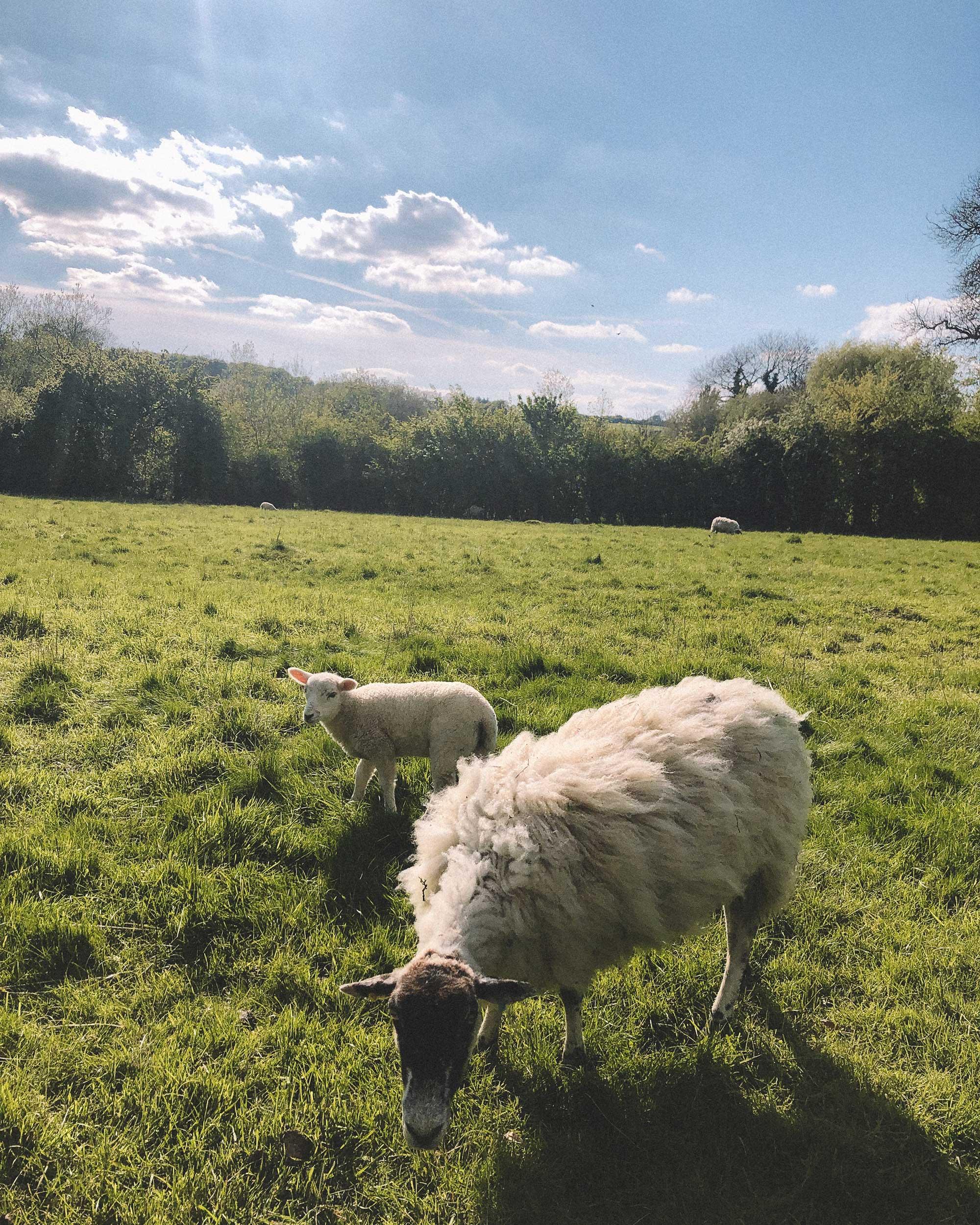 english countryside during spring2.jpg