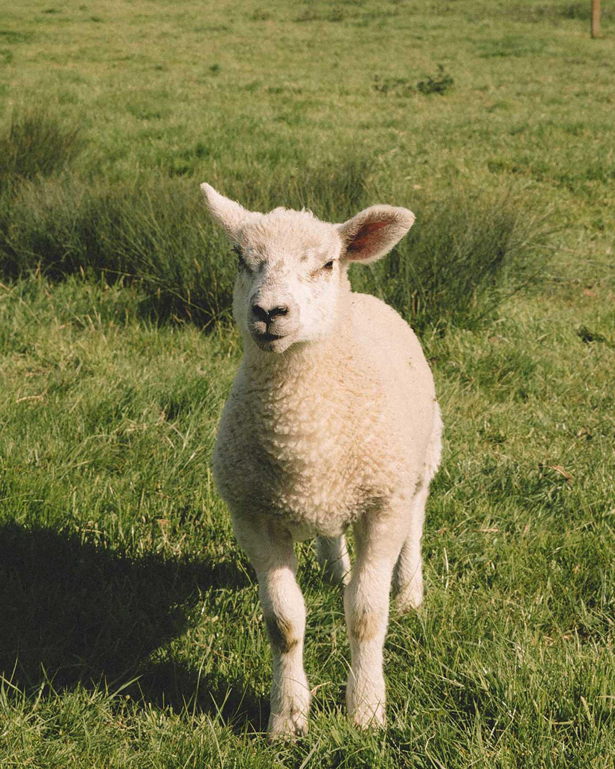 english countryside during spring4.jpg