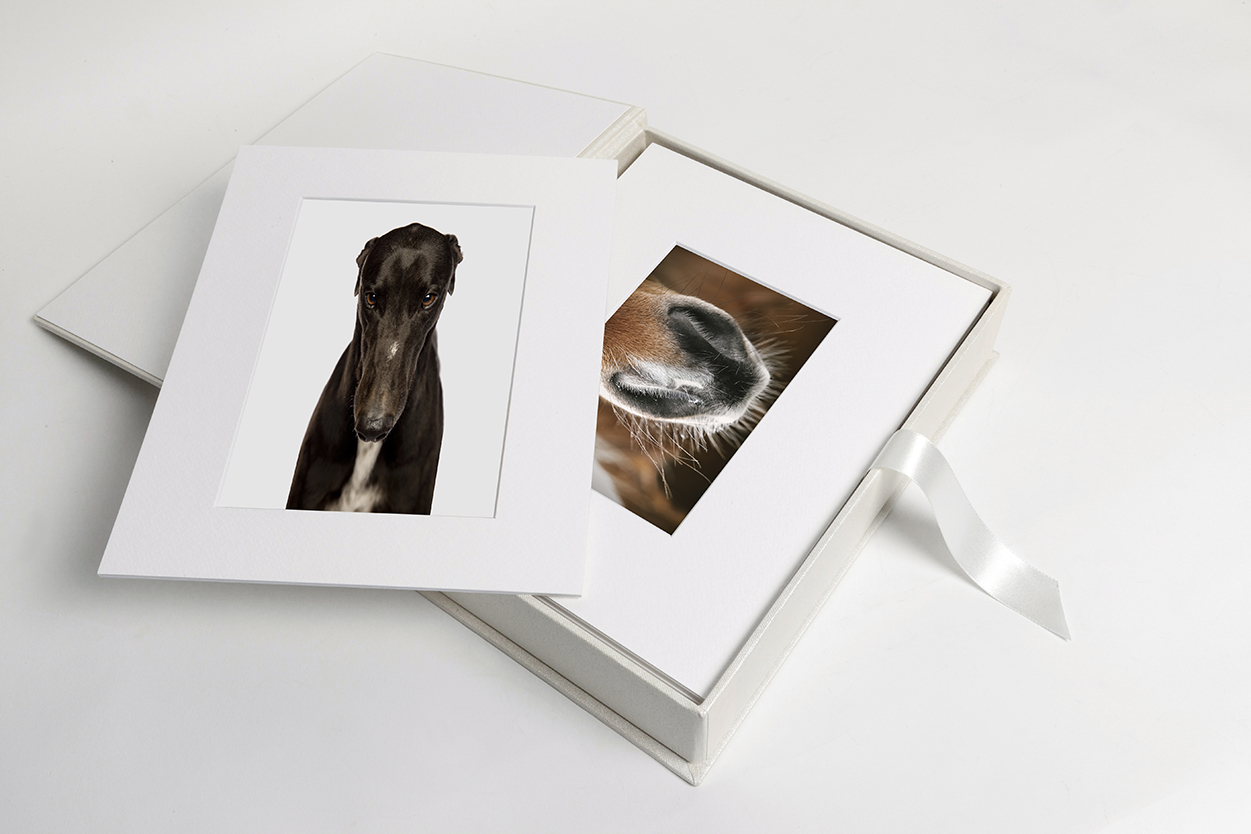 Albums + Boxes - Our gorgeous Studio Boxes and Albums make a stunning coffee table statement. If it's a gift you are after these come with matching presentation boxes!From $485